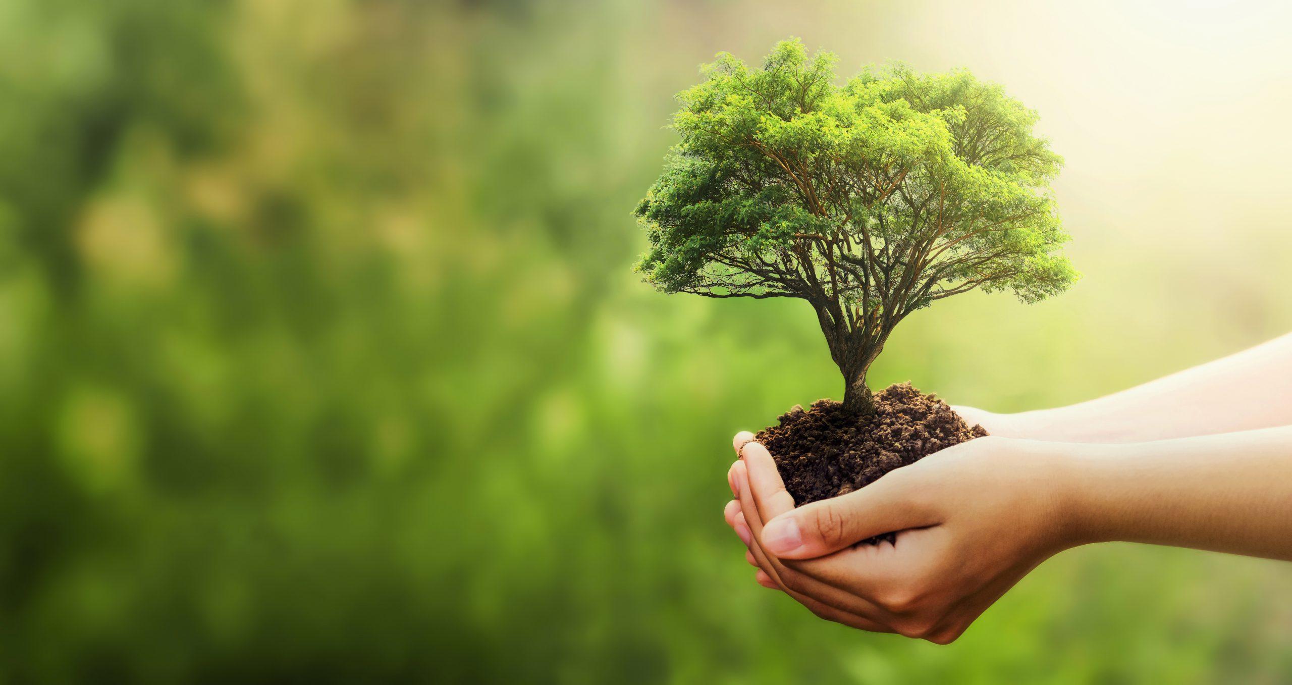 Økologisk bæredygtigt