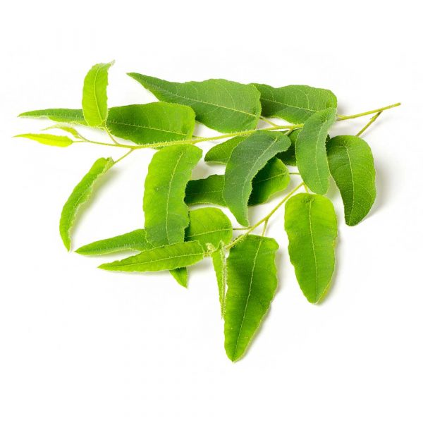 Citron eukalyptus