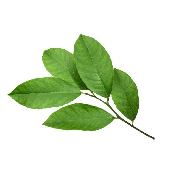 Citron tea tree
